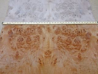 Maple Cluster Burl Wood Veneer 35 x 75 w Paper Back