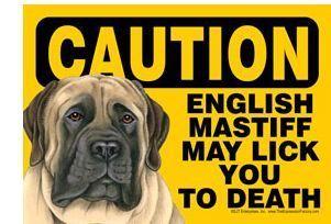 Funny Dog Sign Caution English Mastiff Magnet 7x5