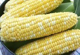 Sweet Corn Seed Serendipity Sweet Corn Seed Fresh Seed Free Shipping