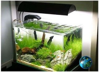 freshwater tropical fish in Aquarium & Fish