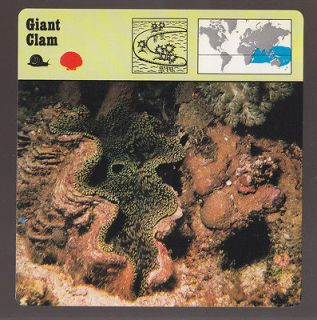 GIANT CLAM Shell Fish 1975 1980 SAFARI ANIMAL FACT PHOTO CARD 26 628